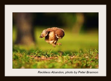 Baby Bird Learning to Fly-withtag