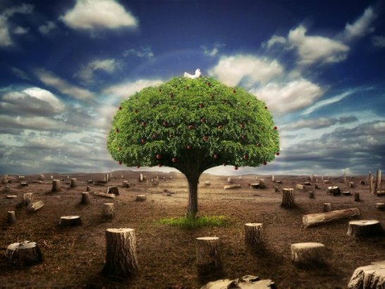 4403-surviving-tree